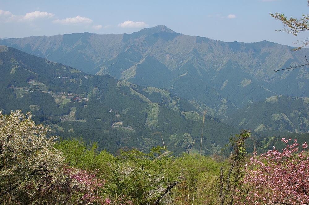 浅間嶺から大岳山を望む